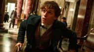 eddie redmayne fantastic beasts and where to find them newt scamander