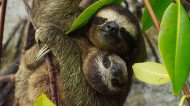 Planet Earth 2 photos Sloth