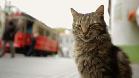 Kedi cats documentary