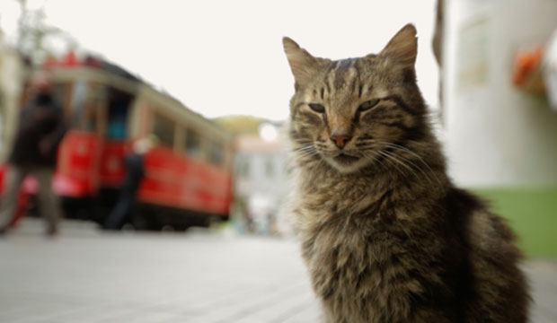 Kedi cats documentary