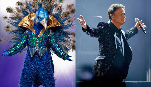 The Masked Singer Peacock Guesses 72 Of Fans Say Donny Osmond Goldderby