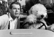 Disney-plus-best-live-actions-films-The-Shaggy-dog