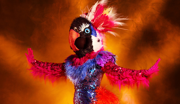 exotic bird the masked dancer