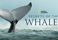 Secrets-of-the-Whales